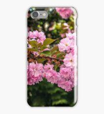 bud Sakura flowers on blurred background of green pine needles and cherry blossom iPhone Case/Skin