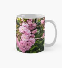 bud Sakura flowers on blurred background of green pine needles and cherry blossom Mug