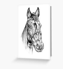 Freehand horse head pencil drawing 15 Greeting Card