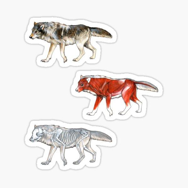 Wolf Anatomy Sticker