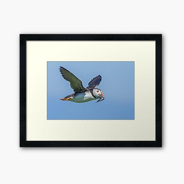 affordable modern feathers racing Printable wall art Original artwork print bird Puffin watercolor painting digital download