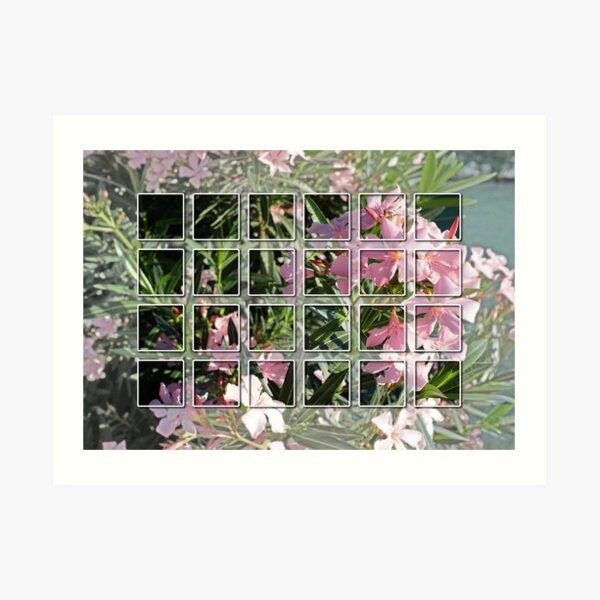 Oleander 2 Kunstdruck