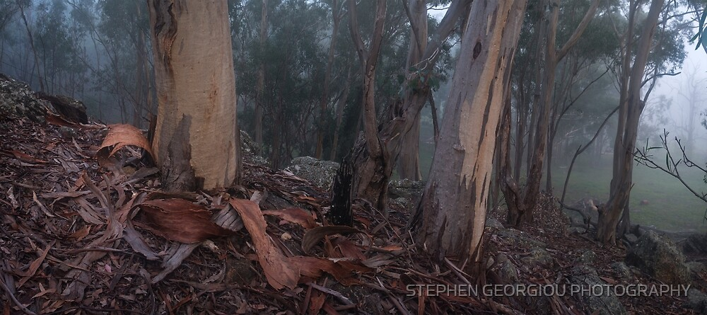 Capertee Bark in the Mist by STEPHEN GEORGIOU PHOTOGRAPHY