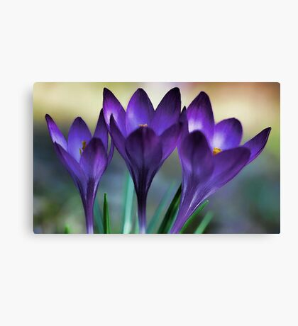 Three Beautiful Ladies in Lavender Canvas Print