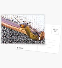 The Lady With The Snake Postcards