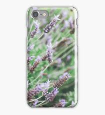 Blooming lavender flowers in the park. Selective focus iPhone Case/Skin