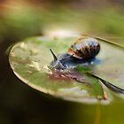 Snail on Water Lily by Tamara Al Bahri