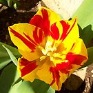Fire Flowerd by Rebecca Ogden