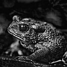 Bah Humbug - American Toad in Black and White by MotherNature2