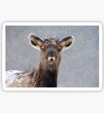 First Winter Sticker