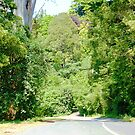 Leaving Sassafras en-route through Lovely Trees in Victoria. Australia* by EdsMum