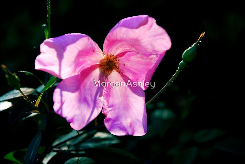 flower 1 by MorganAshley
