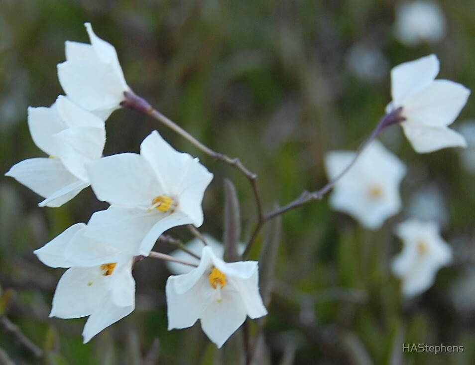 white bunch by HAStephens