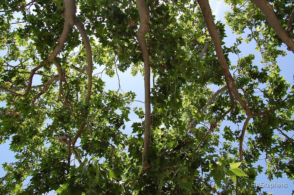 treetops by HAStephens