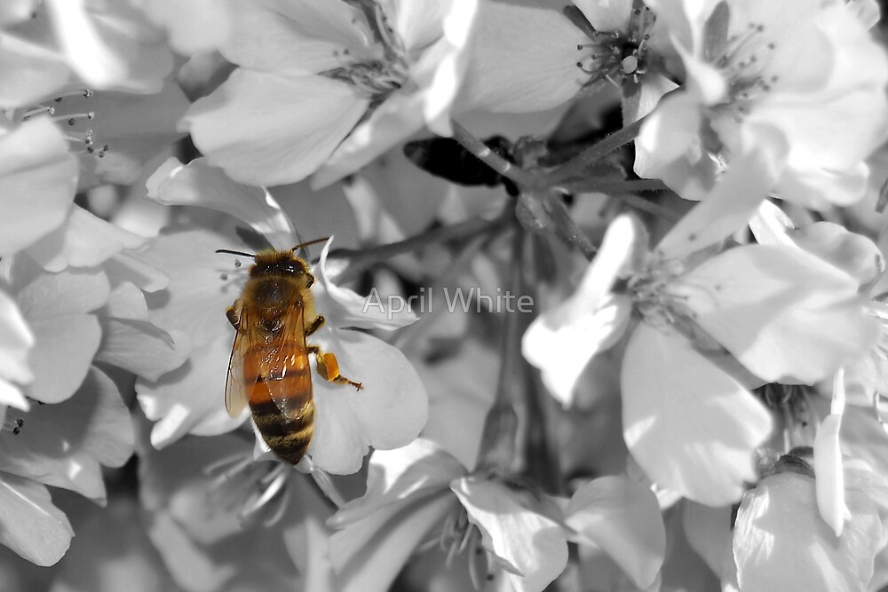Welcome Bees! by April White
