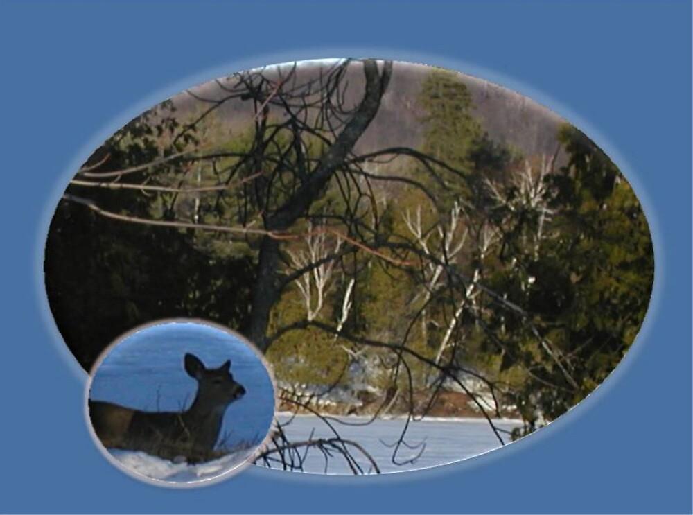 Deer on the lake by Irene Clarke