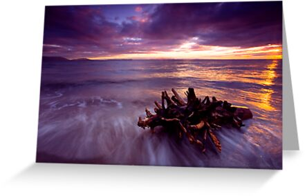 Tide Driven by DawsonImages