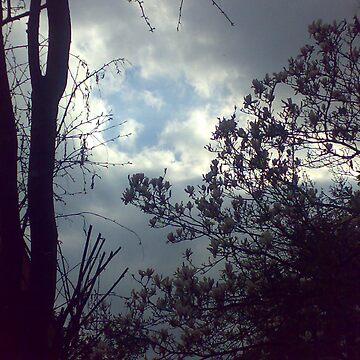 Nature Shot by emmajo7