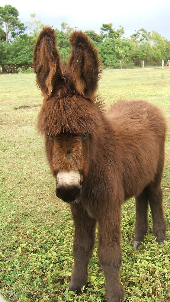Donkey by Diana Forgione
