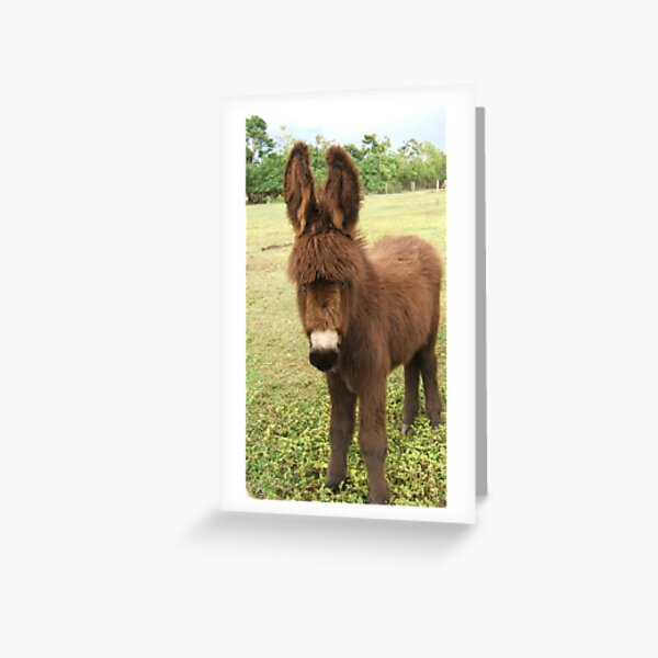 Donkey Greeting Card