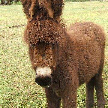 Donkey by Diana16