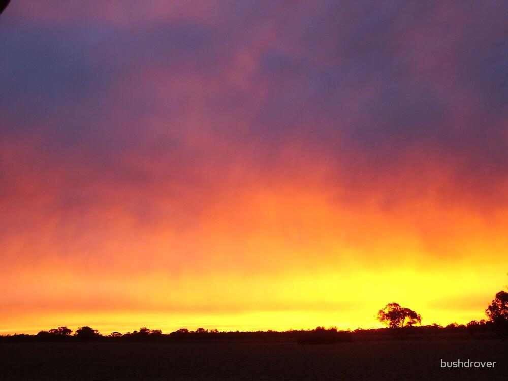 Rainbow Sunrise by bushdrover