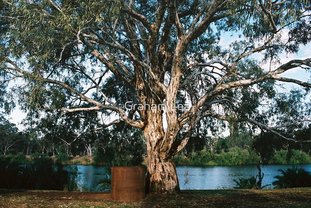 Murray River Gum by Graham Lea