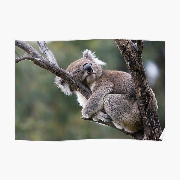 Hug-a-Tree Day Poster