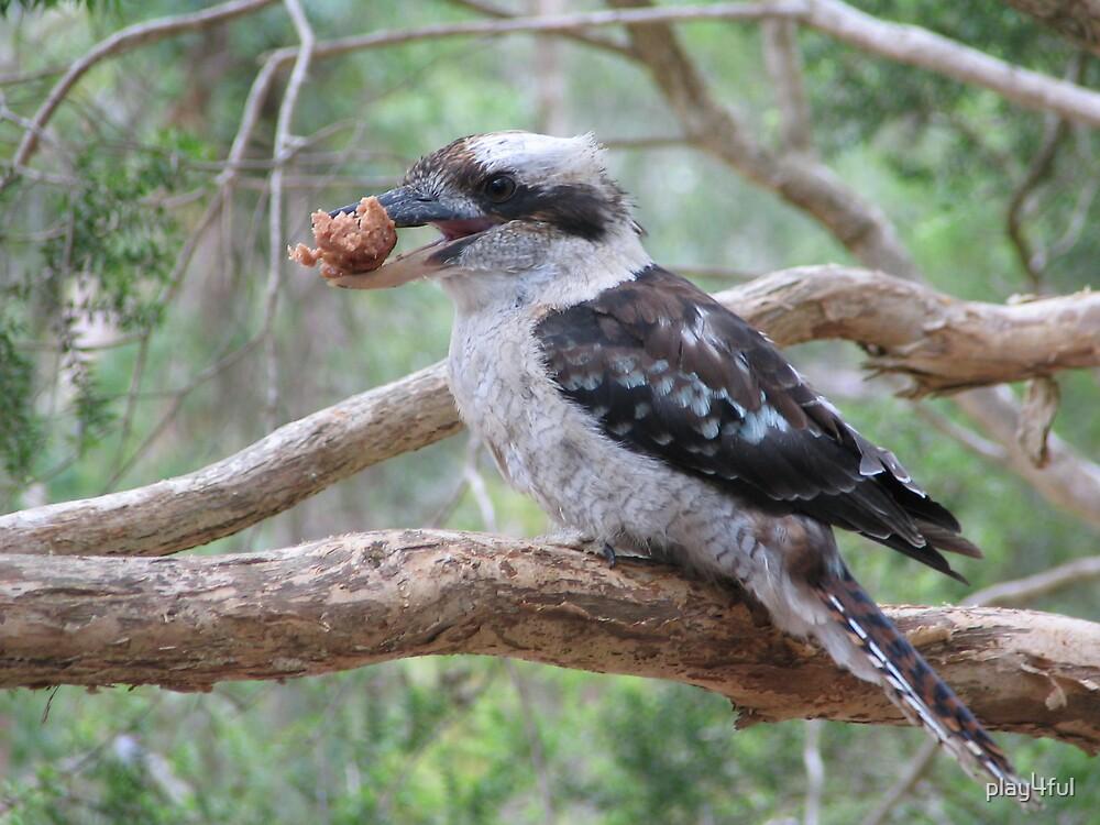 Greedy Kookaburra by play4ful