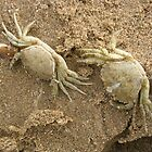 Two Washed Up Crabs by lezvee