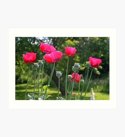 Poppy Power Art Print