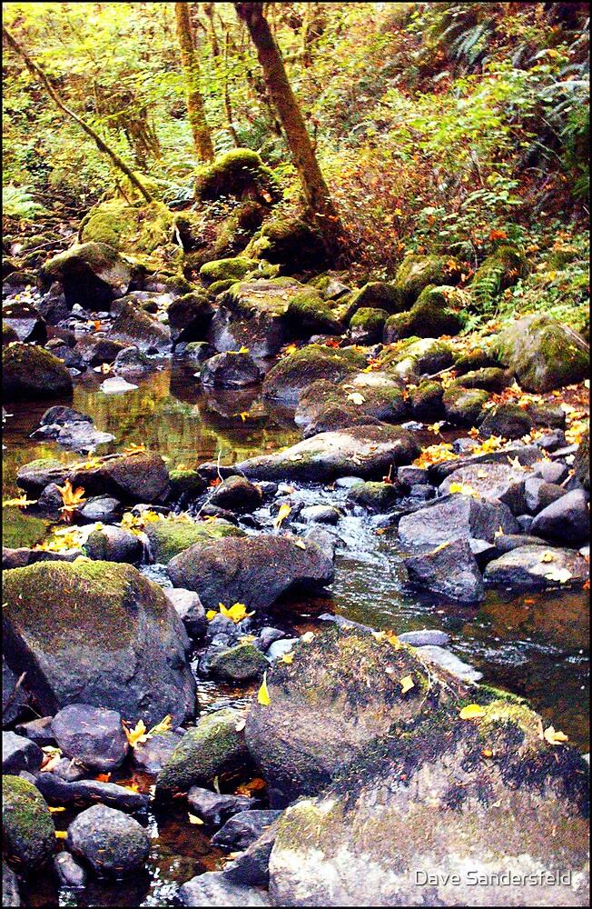 Quiet Brook by Dave Sandersfeld