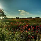 A Fine Summer's Evening in the tees Valley, by Ian Alex Blease