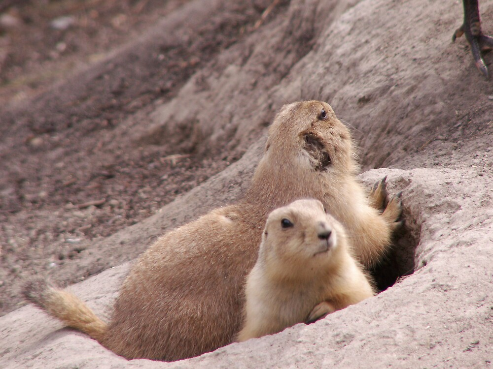Prairie Dogs by Smoothmule