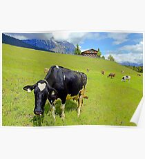 Cows On Green Alpine Pasture in Tyrol Poster