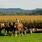 Amish Country © by Mary Campbell