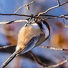Hanging Bird by RicksPix