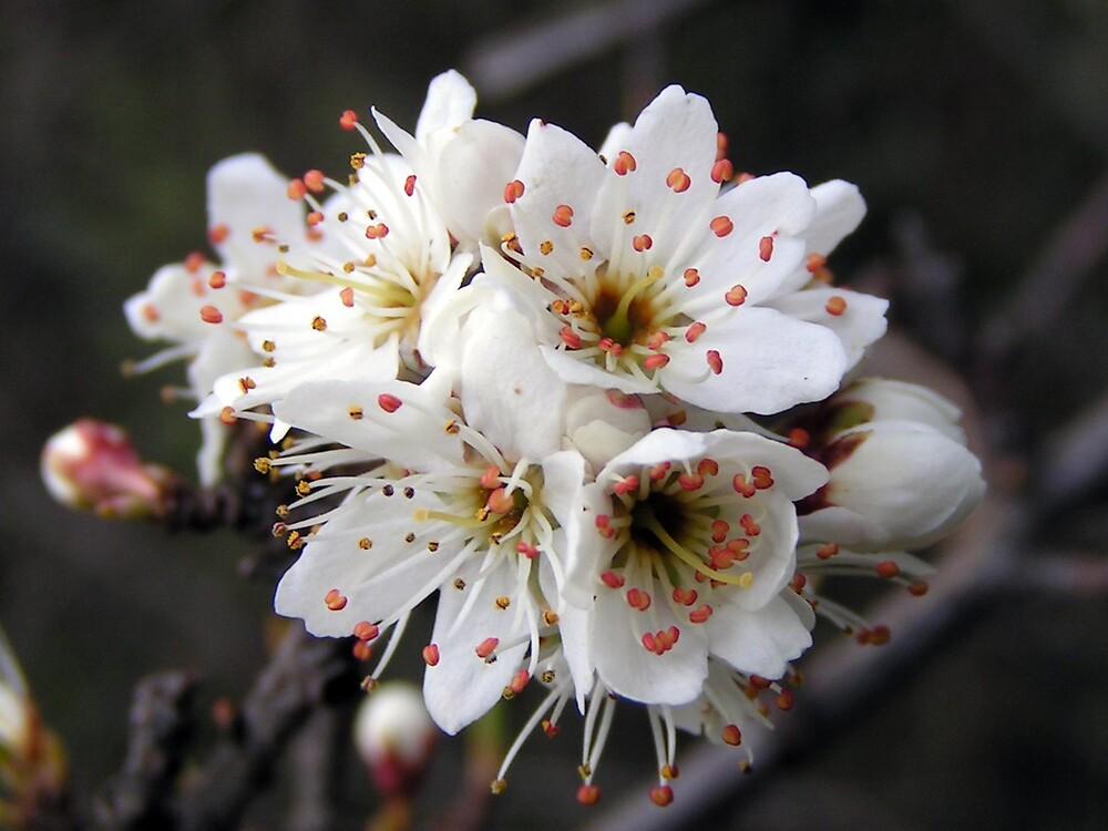 Tree Flowers by ralphdot