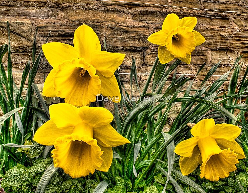 Daffodils by Dave Warren
