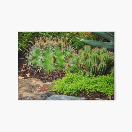 Cactus Art Board Print