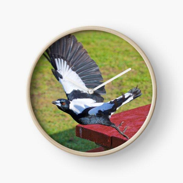 MAGPIE ~ Australian Magpie DZPLEVKC by David Irwin ~ WO Clock