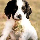 Got Grass? by minnielee