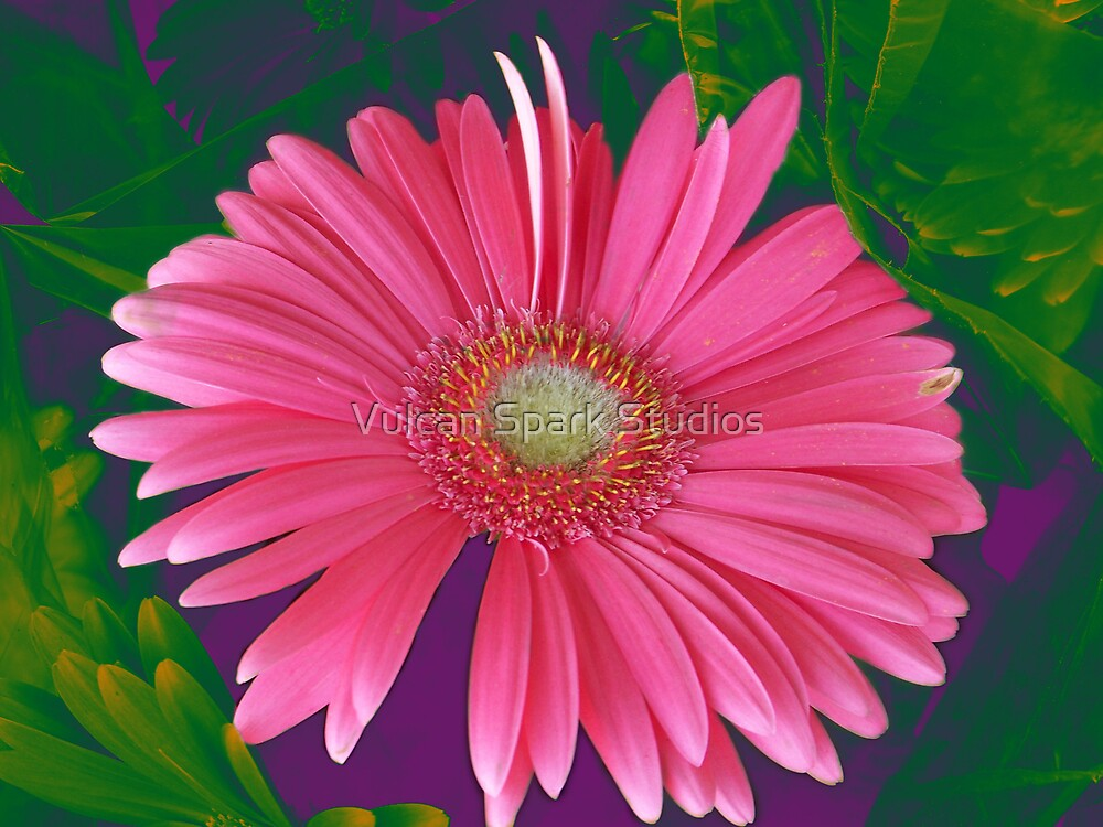 Pink Spring by Vulcan Spark Studios