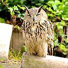 Owl by cs-cookie