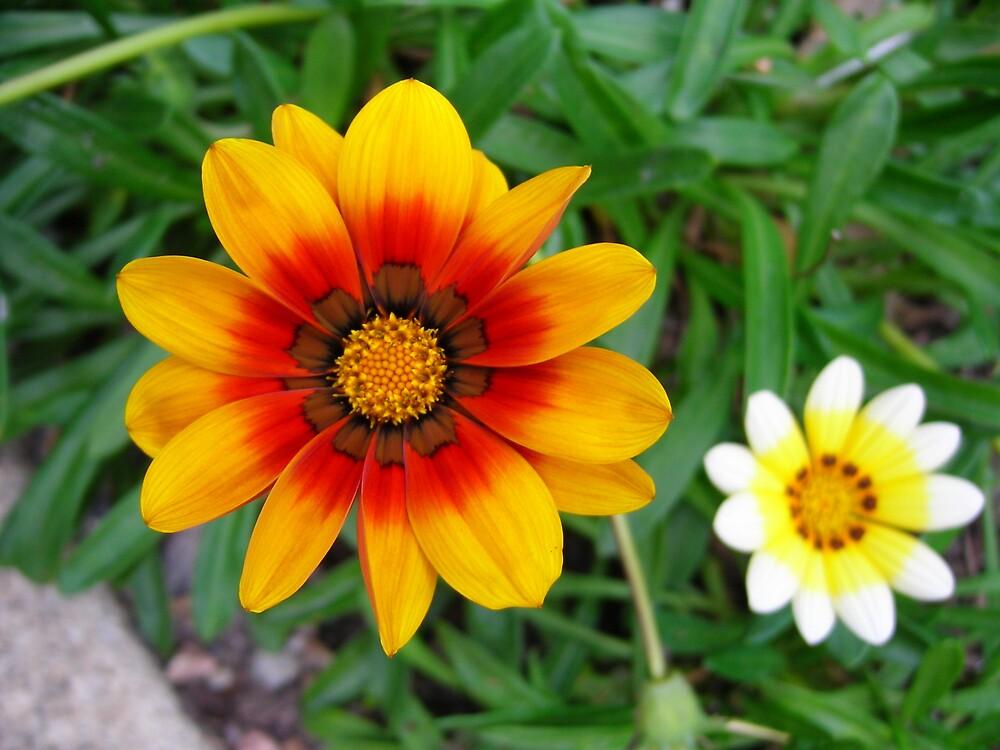 In the garden by Annie5525