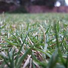 Close-Up Lawn by MissA