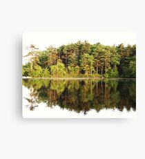 Tree Mirror Canvas Print