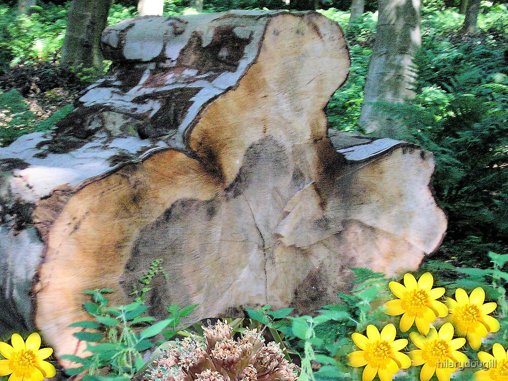 Celandines and butterbur with Big Log by hilarydougill