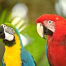 Macaws in Panama by cap10mike