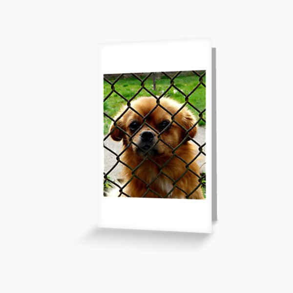 Another prisonier Greeting Card